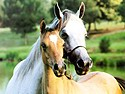 altix-soft-horses-world-screensaver-300086160.JPG