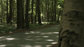 hdri-hub-ftg-00017-road-in-forest-slider-move-300617857.JPG