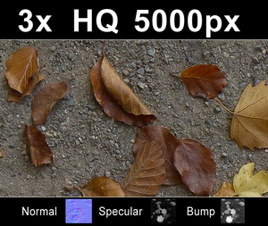 hdri-hub-tex-014-3x-leaves-on-sand-1-300523820.JPG