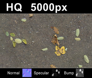 hdri-hub-tex-015-2x-leaves-on-sand-2-300523821.JPG