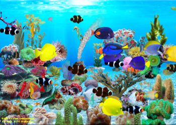 mac-n-pc-software-blue-ocean-aquarium-300739211.JPG