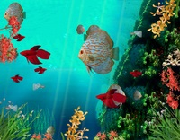 screensavergift-coral-reef-aquarium-3d-animated-wallpaper.jpg